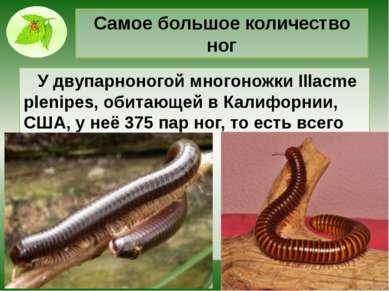 Самое большое количество ног У двупарноногой многоножки Illacme plenipes, оби...