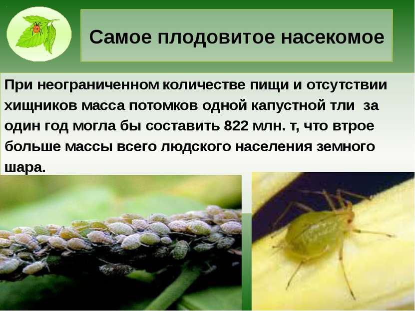 Самое плодовитое насекомое При неограниченном количестве пищи и отсутствии хи...