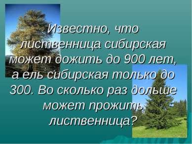 Известно, что лиственница сибирская может дожить до 900 лет, а ель сибирская ...