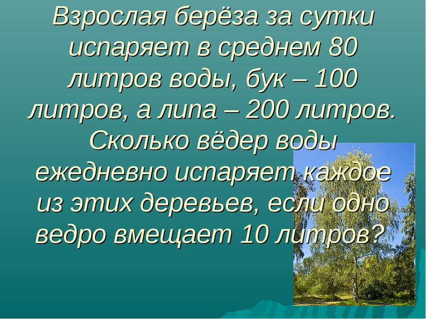 Взрослая берёза за сутки испаряет в среднем 80 литров воды, бук – 100 литров,...