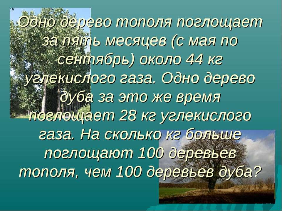 Одно дерево тополя поглощает за пять месяцев (с мая по сентябрь) около 44 кг ...