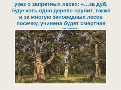 указ о запретных лесах: «…за дуб, буде хоть одно дерево срубит, также и за мн...