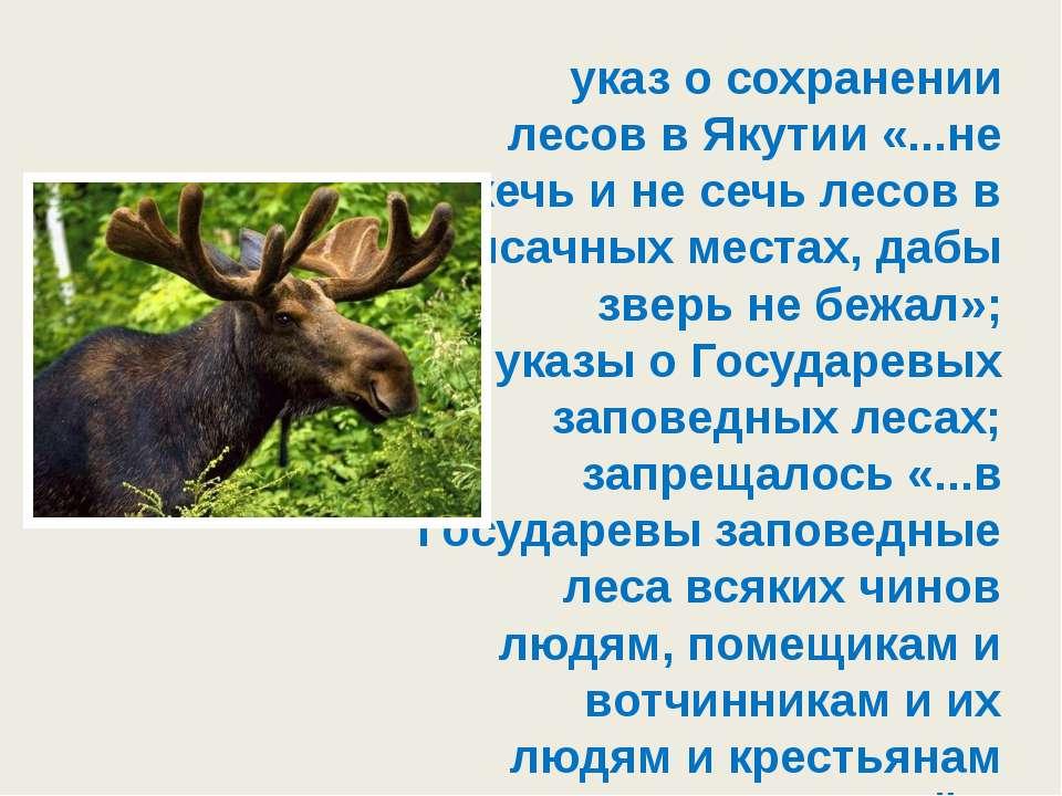 указ о сохранении лесов в Якутии «...не жечь и не сечь лесов в ясачных местах...