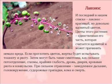 Лаконос И последний в нашем списке – лаконос – красивый, но довольно ядовитый...