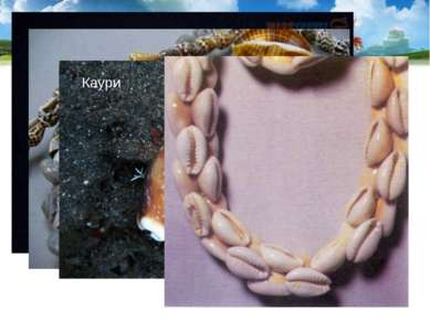 Раковины используются как сувениры и поделочный материал. В старину раковины ...