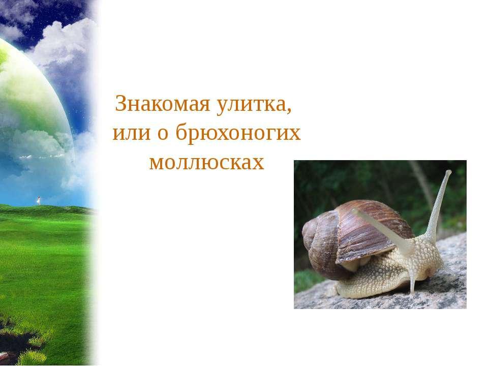 Знакомая улитка, или о брюхоногих моллюсках