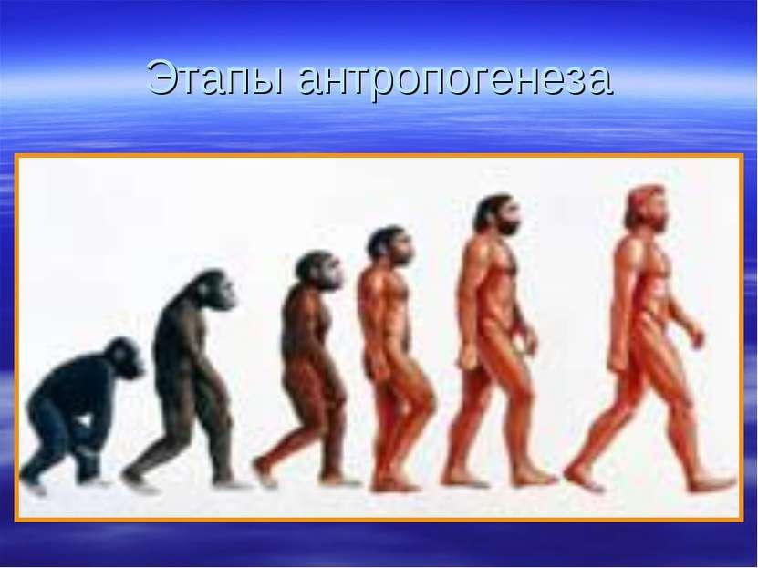 Этапы антропогенеза