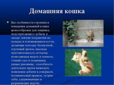 Домашняя кошка Все особенности строения и поведения домашней кошки целесообра...
