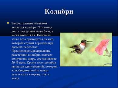 Колибри Замечательным лётчиком является колибри. Эта птица достигает длины вс...