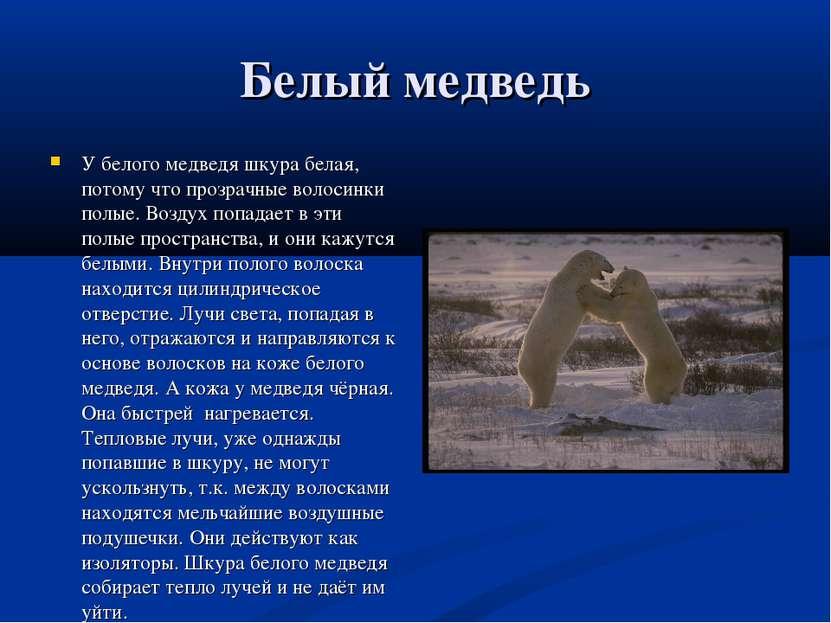 Белый медведь У белого медведя шкура белая, потому что прозрачные волосинки п...
