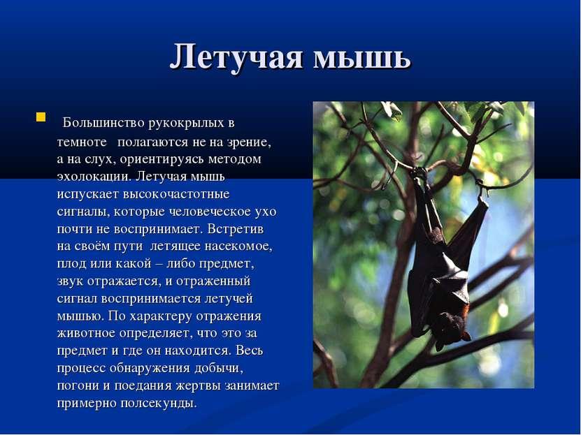 Летучая мышь Большинство рукокрылых в темноте полагаются не на зрение, а на с...