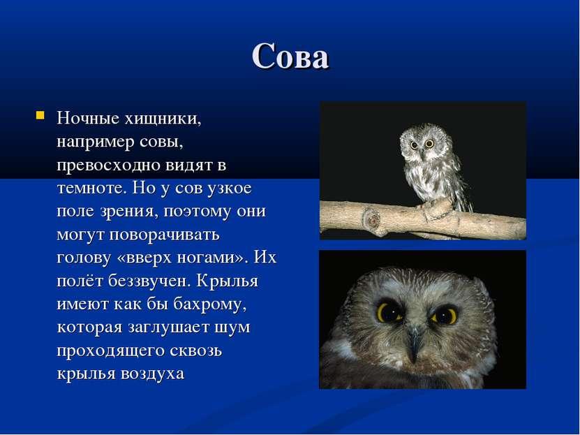 Сова Ночные хищники, например совы, превосходно видят в темноте. Но у сов узк...