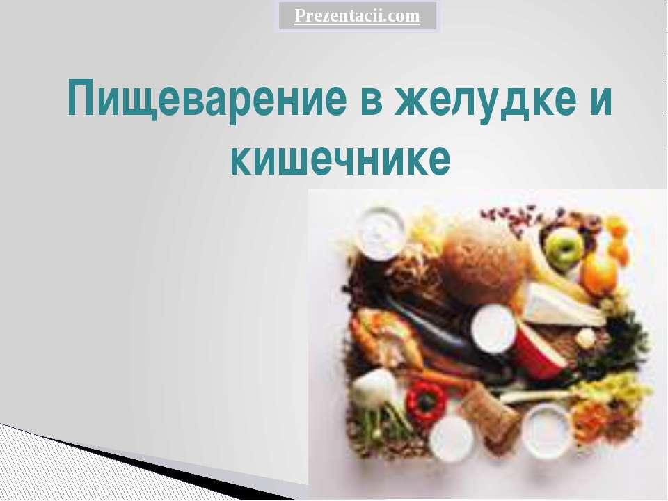 Пищеварение в желудке и кишечнике