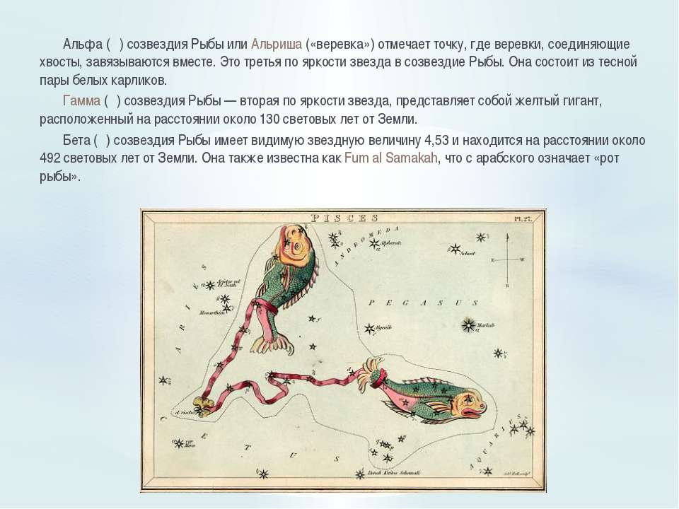 Альфа (α) созвездия Рыбы или Альриша («веревка») отмечает точку, где веревки,...