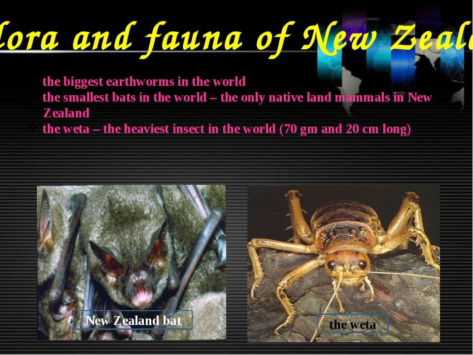 Flora and fauna of New Zealand the biggest earthworms in the world the smalle...