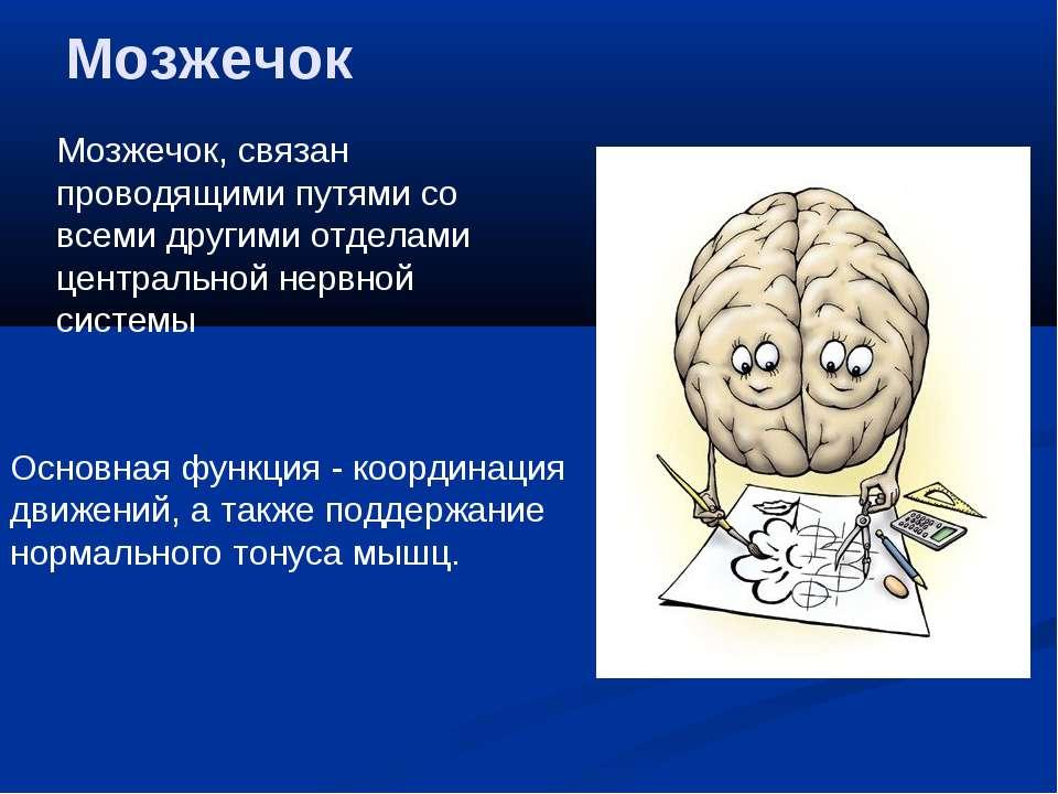 Мозжечок Мозжечок, связан проводящими путями со всеми другими отделами центра...