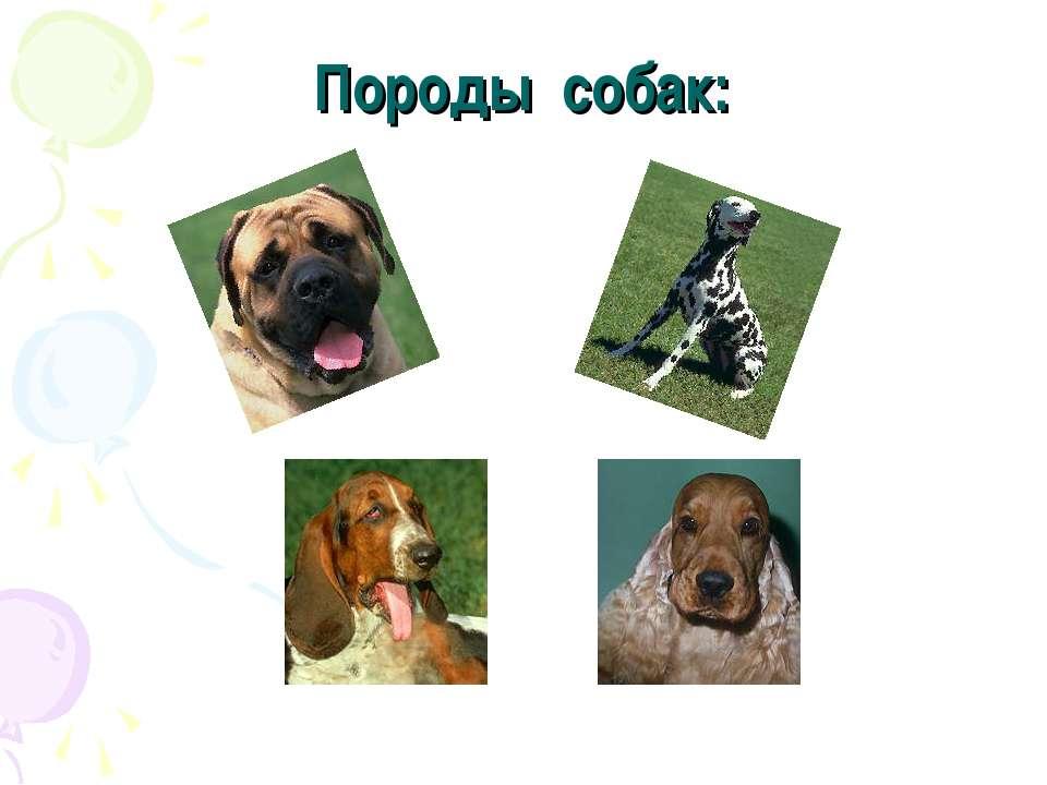 Породы собак: