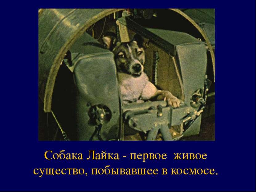 Собака Лайка - первое живое существо, побывавшее в космосе.