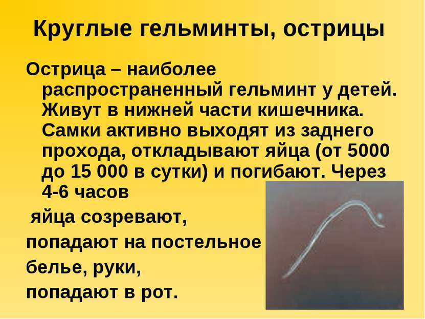 Круглые гельминты, острицы Острица – наиболее распространенный гельминт у дет...
