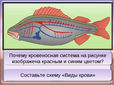 * Баранова А.П. * Почему кровеносная система на рисунке изображена красным и ...