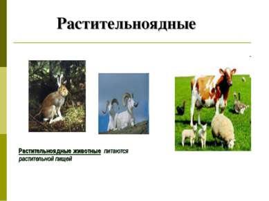 Растительноядные Растительноядные животные питаются растительной пищей