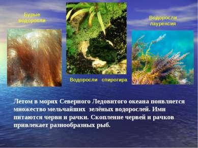 Летом в морях Северного Ледовитого океана появляется множество мельчайших зел...
