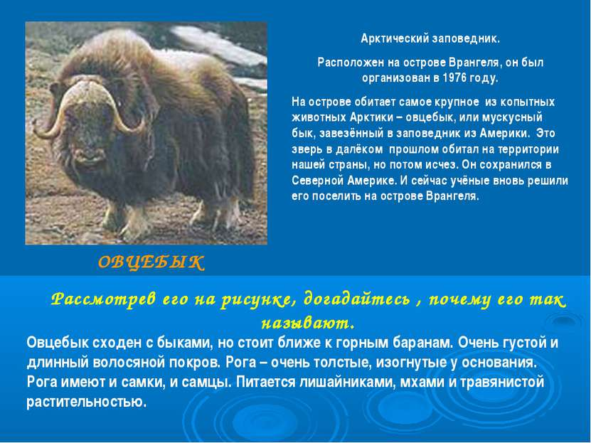 Арктический заповедник. Расположен на острове Врангеля, он был организован в ...