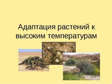 Адаптация растений к высоким температурам .