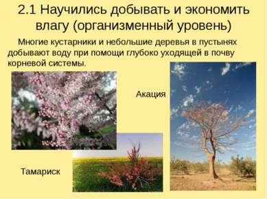 2.1 Научились добывать и экономить влагу (организменный уровень) Многие куста...