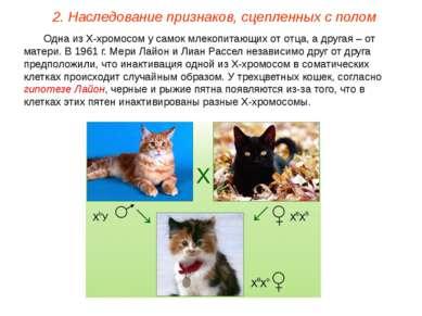 Одна из Х-хромосом у самок млекопитающих от отца, а другая – от матери. В 196...