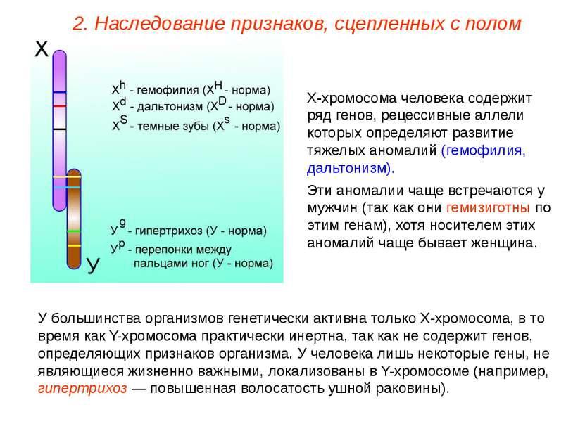 Х-хромосома человека содержит ряд генов, рецессивные аллели которых определяю...