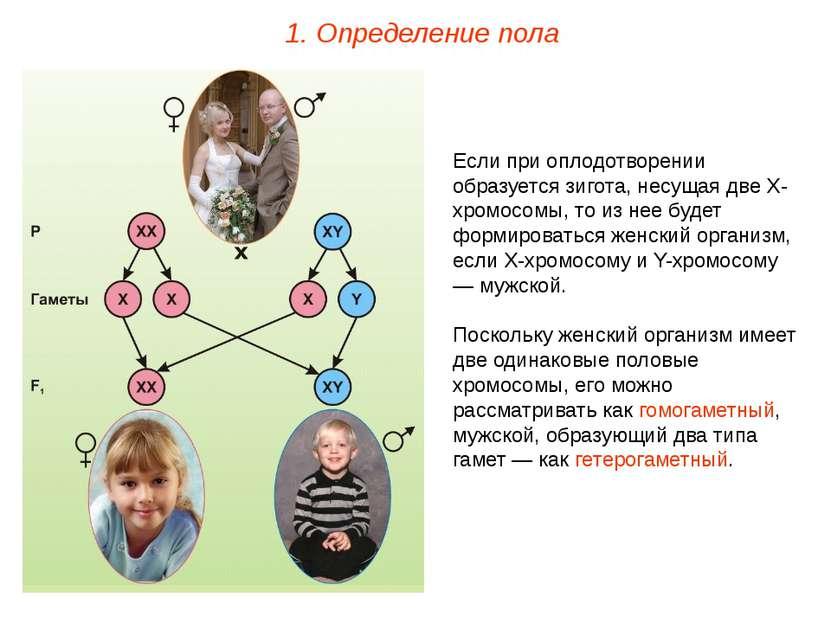 У гетерогаметного пола колличество гамет с х и у хромосомой