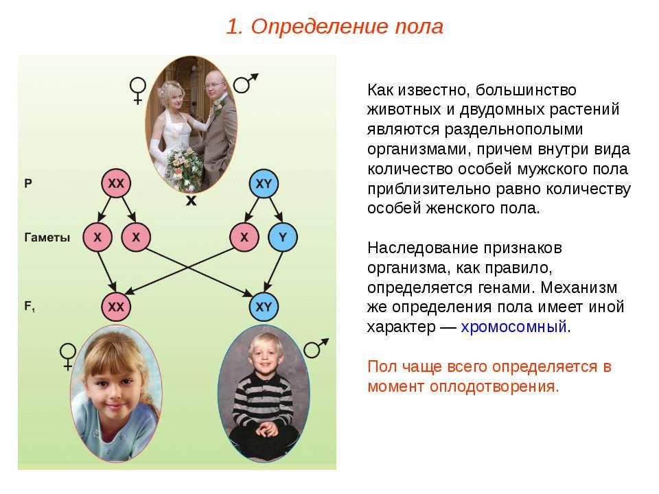 1. Определение пола Как известно, большинство животных и двудомных растений я...