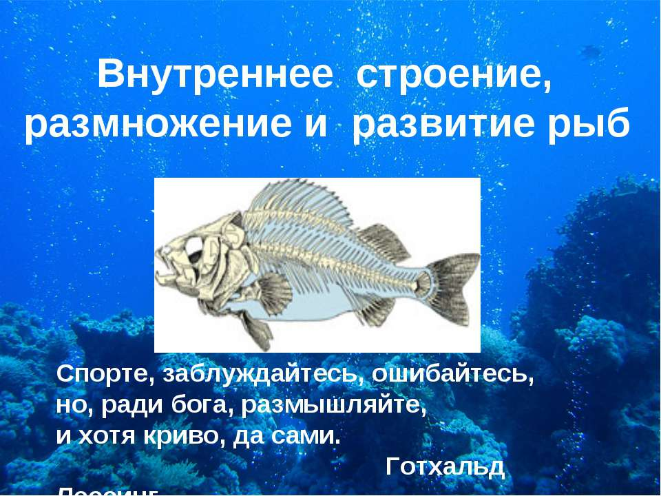 Внутреннее строение, размножение и развитие рыб Спорте, заблуждайтесь, ошибай...