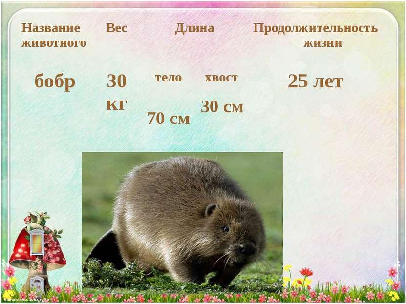 Название животного Вес Длина Продолжительность жизни бобр 30 кг тело хвост 25...