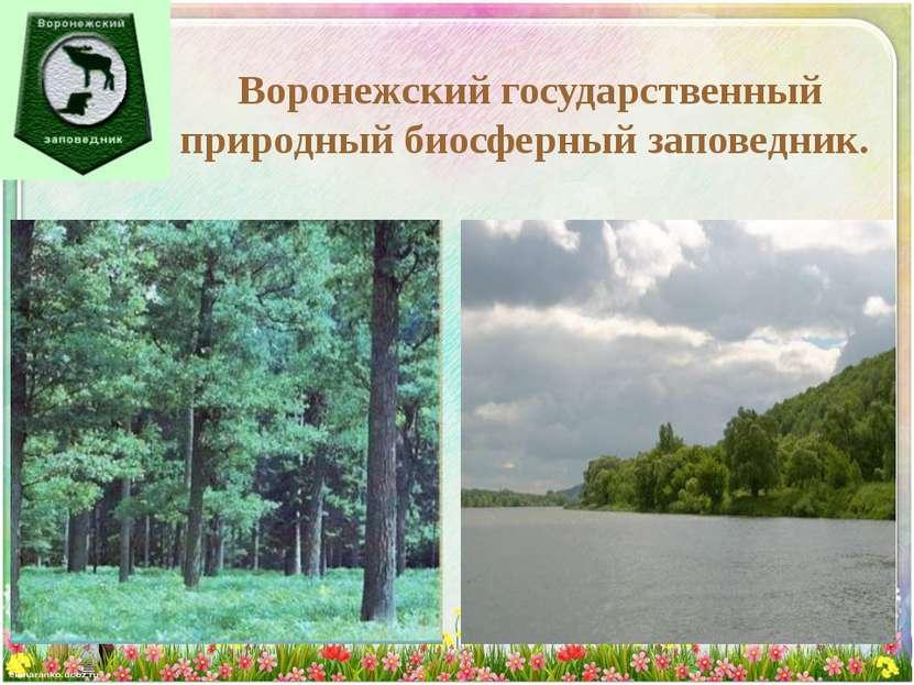 Воронежский государственный природный биосферный заповедник.