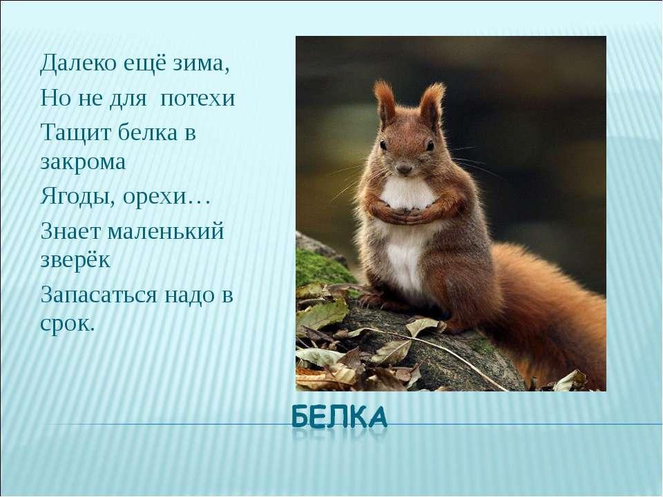 Далеко ещё зима, Но не для потехи Тащит белка в закрома Ягоды, орехи… Знает м...
