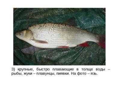 3) крупные, быстро плавающие в толще воды – рыбы, жуки – плавунцы, пиявки. На...