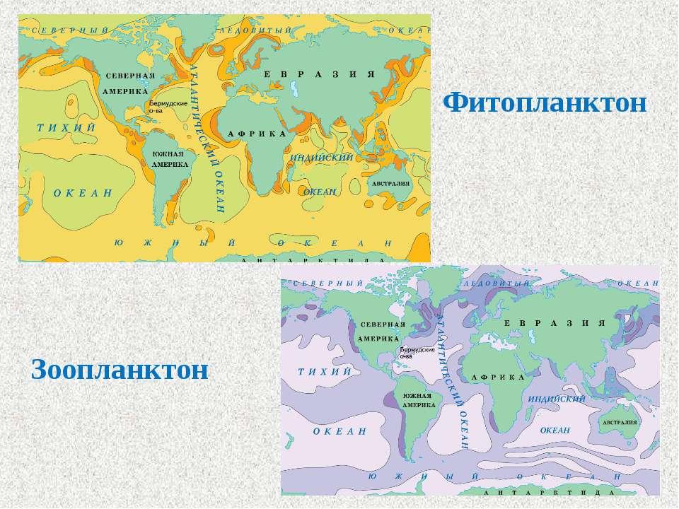 Фитопланктон Зоопланктон