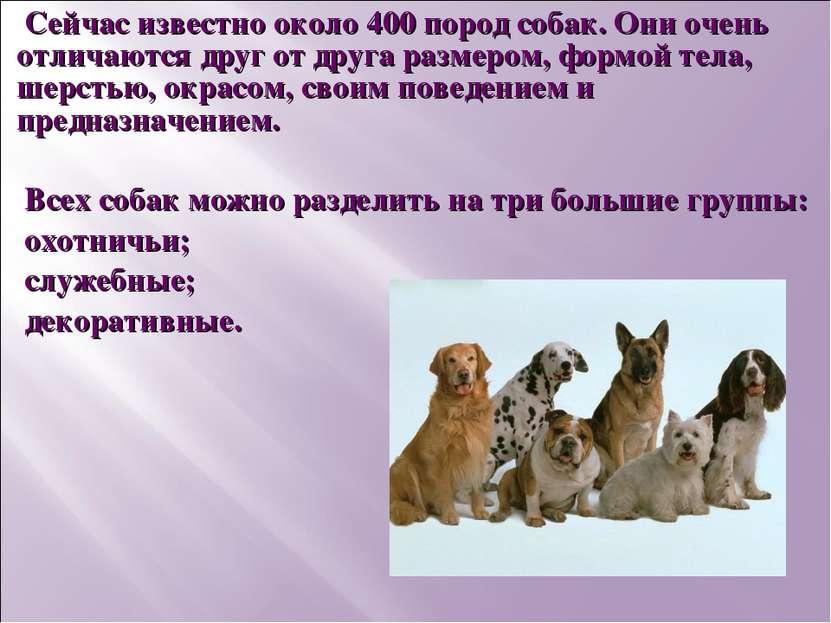 Сейчас известно около 400 пород собак. Они очень отличаются друг от друга раз...