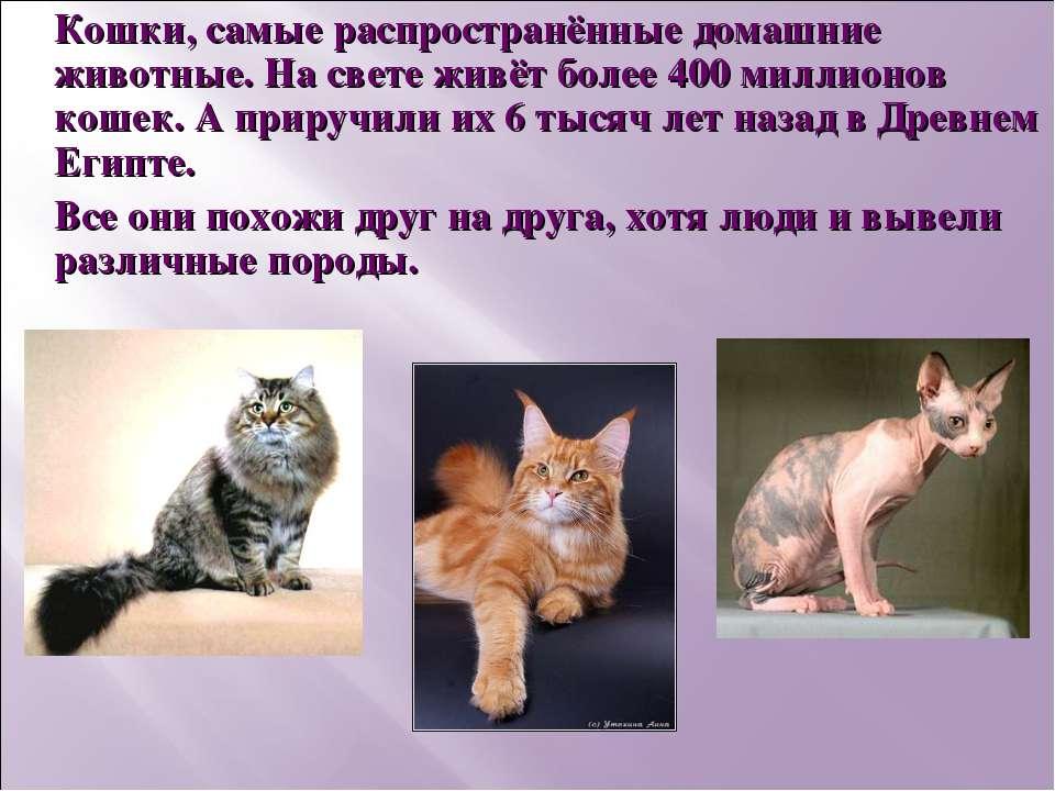 Кошки, самые распространённые домашние животные. На свете живёт более 400 мил...