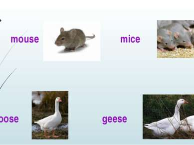mouse mice goose geese