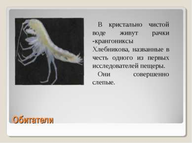 Обитатели В кристально чистой воде живут рачки -крангониксы Хлебникова, назва...