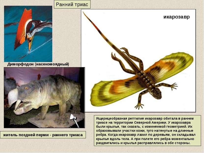 Ранний триас житель поздней перми - раннего триаса Ящерицеобразная рептилия и...