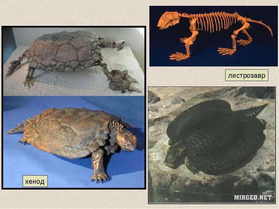 хенод листрозавр