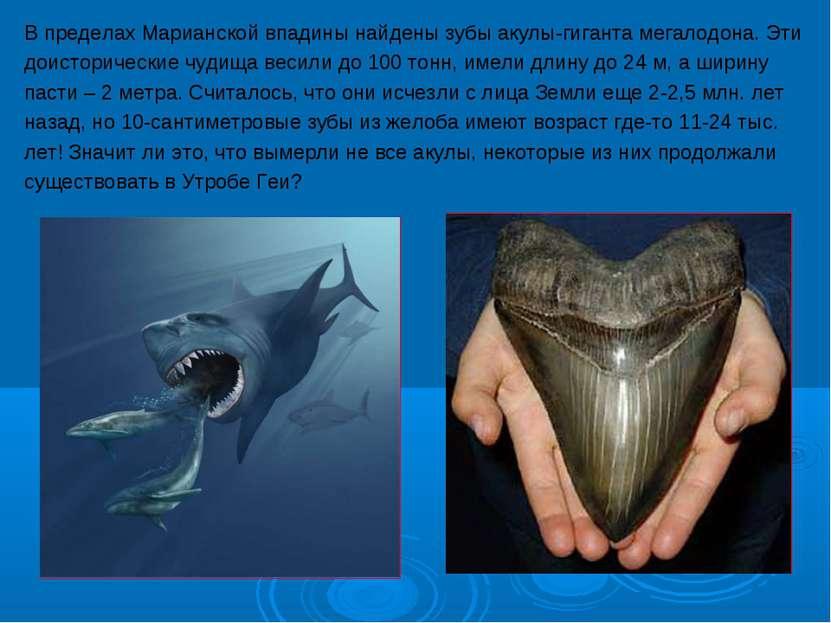 В пределах Марианской впадины найдены зубы акулы-гиганта мегалодона. Эти доис...