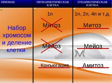 Набор хромосом и деление клетки 1n Митоз Мейоз Конъюгация 1n, 2n, 4n и т.д. М...