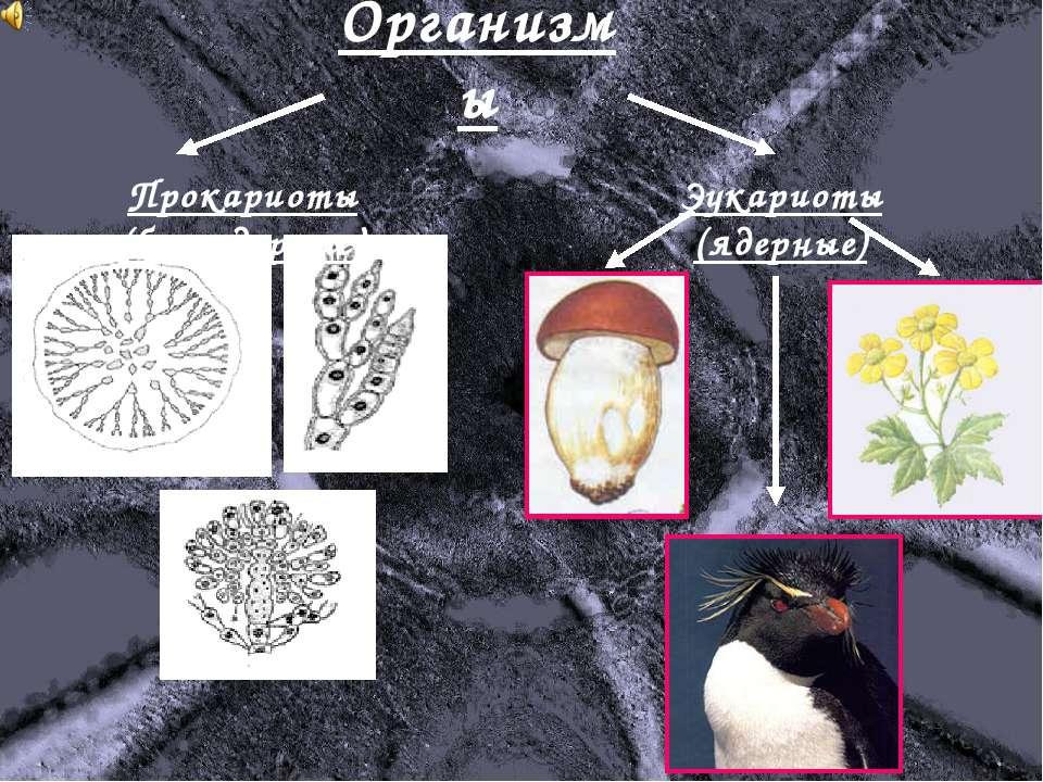 Организмы Прокариоты (безъядерные) Эукариоты (ядерные)
