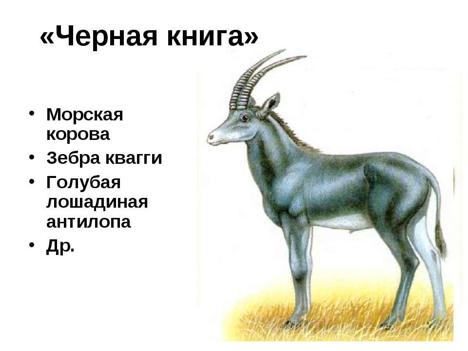 «Черная книга» Морская корова Зебра квагги Голубая лошадиная антилопа Др.