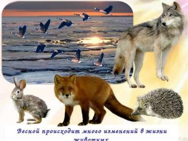 Весной происходит много изменений в жизни животных.